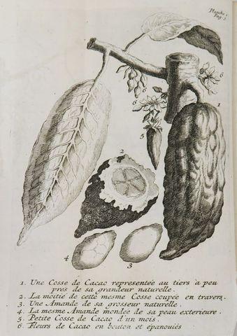 QUELUS [CHELUS] D.. Histoire naturelle du cacao, et du sucre; di...