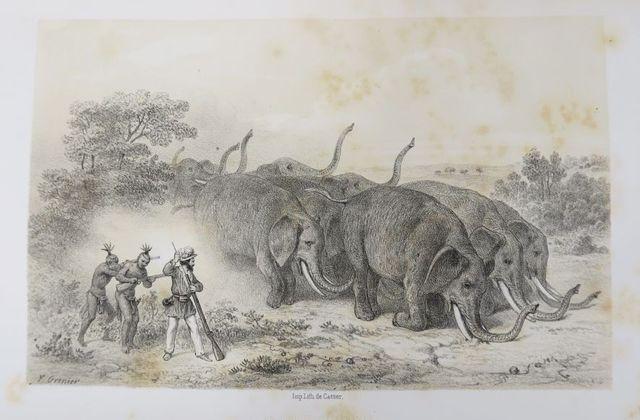 Afrique - DELEGORGUE (Adulphe). Voyage dans l'Afrique australe, n...