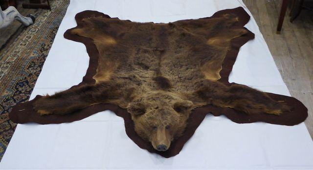 Peau d'Ours brun / Brown Bear (Ursus arctos) (II/A) montée sur fe...