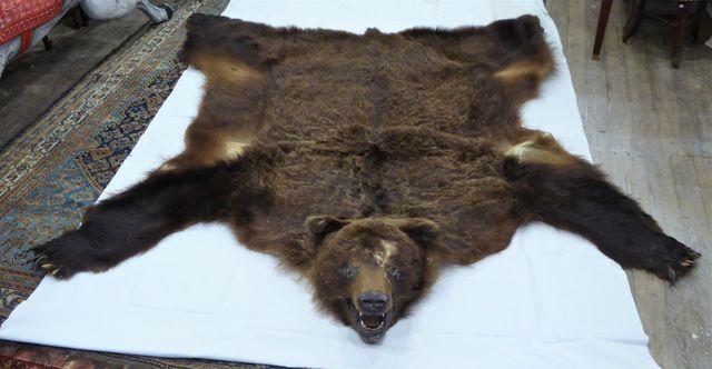 Peau d'Ours kodiak / Kodiak Bear (Ursus arctos middendorffi) (II/...