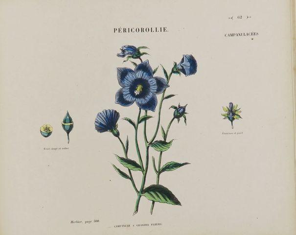 AUDOUIT (Edmond). Atlas de l'Herbier des demoiselles. Paris, Allo...