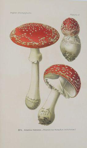 DUFOUR (Louis). Atlas des champignons comestibles et vénéneux. Pa...