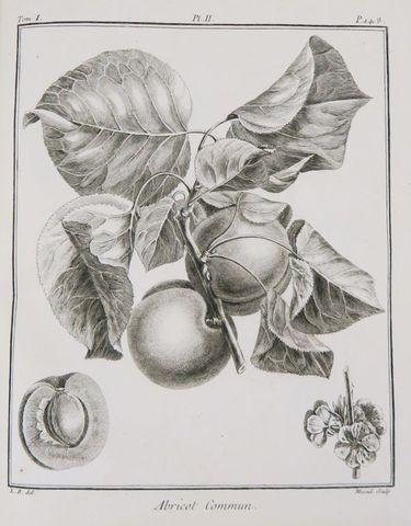 DUHAMEL DU MONCEAU (Henri-Louis). Traite? des arbres fruitiers; ...