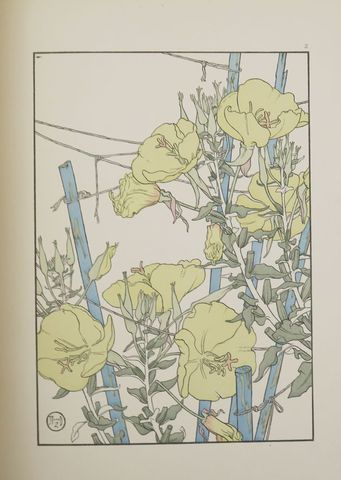 FOORD (Jeanie). Decorative Plant & Flower Studies for the use of ...