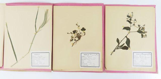 Herbier début XXe siècle. Herbier composée vers 1900 par Reine Ma...