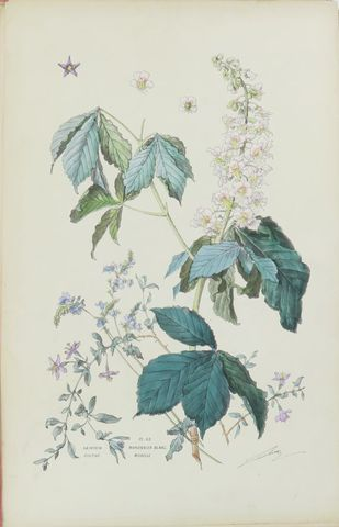 LAMBERT (Henry). Flore naturelle. Etudes par Henry Lambert. Paris...