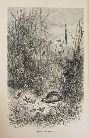 LEROY (E.). Chez les oiseaux. Paris, Firmin-Didot, 1893. Petit in...