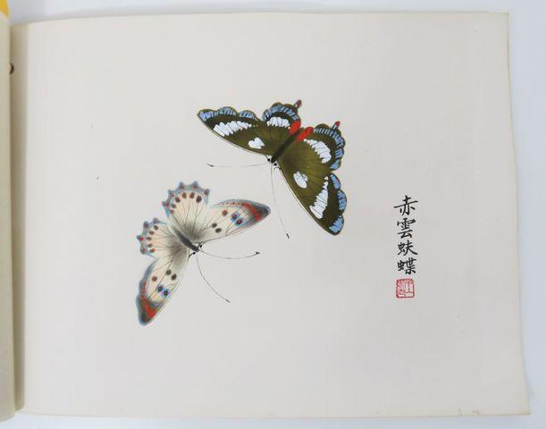 [Papillons]. Album oblong (27 x 19 cm) broché avec un lacet de so...